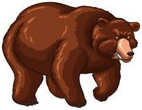 Big Bear avec la fourrure brune illustration libre de droits
