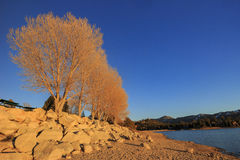 Big bear lake. Sunset view of Big bear lake, Los Angels County, California Royalty Free Stock Images