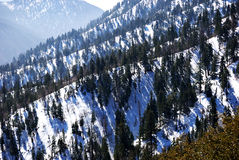 Big Bear Mountains Royalty Free Stock Photo