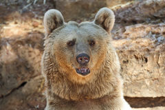 Big Bear posing for visitorsi in Tel Aviv Stock Photos