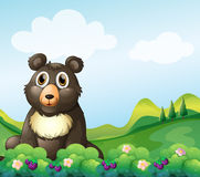 A big bear sitting in the garden Stock Images