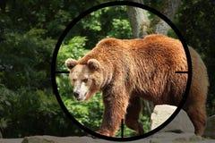 Big bear  Ursus arctos Stock Photography