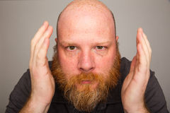 Big beard. Bald man with a fluffy red beard Royalty Free Stock Photography