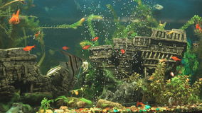 Big beautiful aquarium with small fishes indoors. Close-up stock footage