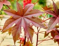 Big beautiful autumn leaf Royalty Free Stock Photos