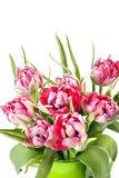 Big beautiful bouquet of red tulips Stock Images