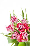Big beautiful bouquet of red tulips Royalty Free Stock Image
