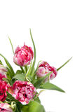 Big beautiful bouquet of red tulips Royalty Free Stock Photography