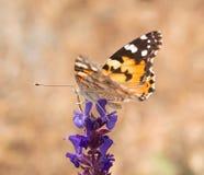 Big beautiful butterfly Stock Photos