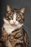 Big beautiful cat portrait Stock Image