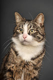 Big beautiful cat portrait Stock Photo
