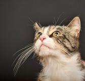Big beautiful cat portrait Stock Photos