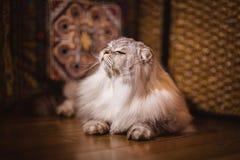 Big beautiful cat Stock Images