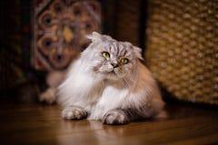 Big beautiful cat Stock Photo