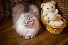 Big beautiful cat Royalty Free Stock Photography