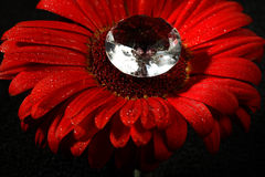 Big beautiful diamond in the center of red flower Stock Image