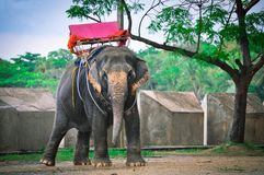 Big elephant standing in the rain. Thailand, Pattaya stock photo