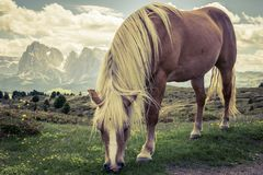 Big beautiful horse. Some beautiful wild horses with a mountain scenery in the background stock photography