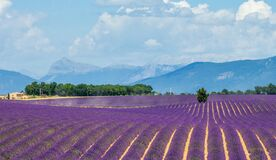 Free Big Beautiful Lavender Field With A Farm In The Background Of Mountains And Beautiful Sky With Clouds. Stock Image - 170895111