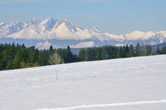 Big beautiful mountain in winter. With trees in foreground Stock Image