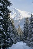 Big beautiful mountain in winter. With trees in foreground Royalty Free Stock Photography