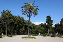 Big beautiful palm trees on Piazzale Napoleone Royalty Free Stock Image