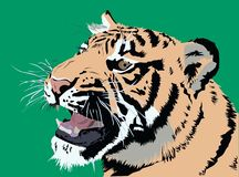 Big and beautiful tiger with his mouth open vector illustration