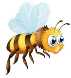 A big bee Royalty Free Stock Photo