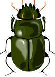 Big beetle Stock Photography