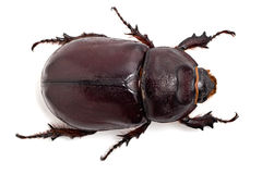 Big beetle. On the isolated background Royalty Free Stock Photos