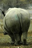 Big behind. The very large back side of a rhinoseros Royalty Free Stock Photography