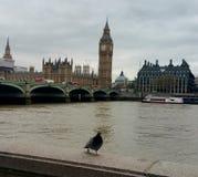 Big Ben λίγο πουλί Στοκ Εικόνα