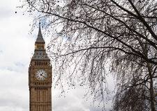 Big Ben avec l'arbre à Londres Photographie stock libre de droits