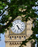 Big Ben. The Clock Face of Big Ben Framed by Green Foliage at the Houses of Parliament in the City of Westminster in London England Royalty Free Stock Photo