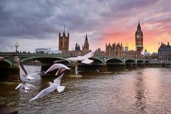 Big Ben con la abadía de Westminster y las gaviotas del vuelo Fotografía de archivo