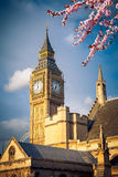 Big Ben in London at spring Stock Photography