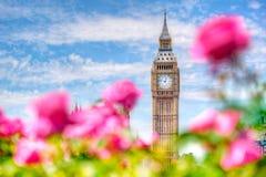 Big Ben, Londra Regno Unito La vista da un giardino pubblico con le belle rose fiorisce Fotografia Stock