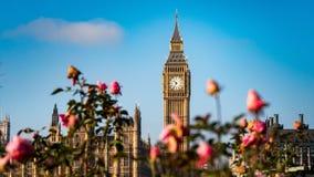 Big Ben met rozen royalty-vrije stock afbeeldingen