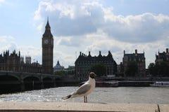Big Ben nella città Londra in Inghilterra Fotografia Stock