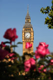 Big Ben with roses, London, UK Stock Photos