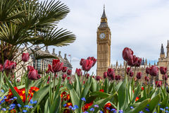 Big Ben in spring. London Stock Photography