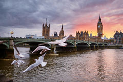 Big Ben with the Westminster Abbey and flying seagulls Stock Photography