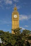 Big Ben y árbol Imagen de archivo