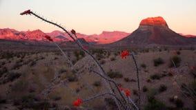 Big Bend National Park Desert Landscape at Sunset Stock Photo