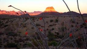 Big Bend National Park Desert Landscape at Sunset Stock Photography