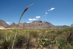 Big Bend National Park scenery, Texas, US Royalty Free Stock Photography