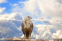 Big bird Stock Photo