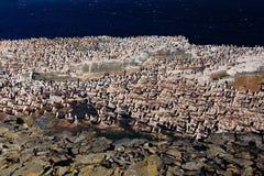 Big bird colony, penguins and cormorants, with rock and dark blue sky, Sea Lion Island, Falkland Islands Stock Photo