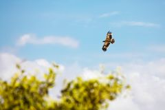 Big bird flying in the sky of Kenya Stock Photography