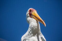 Big bird in front of blue sky. In summer royalty free stock photography